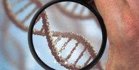 Стволовые клетки детей навсегда остаются в теле матери